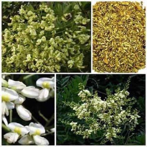 100g trà hoa hoè khô - 19897242 , 25069689 , 15_25069689 , 58000 , 100g-tra-hoa-hoe-kho-15_25069689 , sendo.vn , 100g trà hoa hoè khô