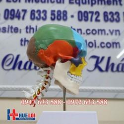 Mô hình xương hộp sọ đánh màu riêng biệt