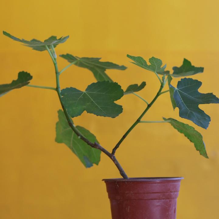 cây sinh trưởng phát triển tốt