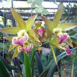 Memolity Hoa và Cây