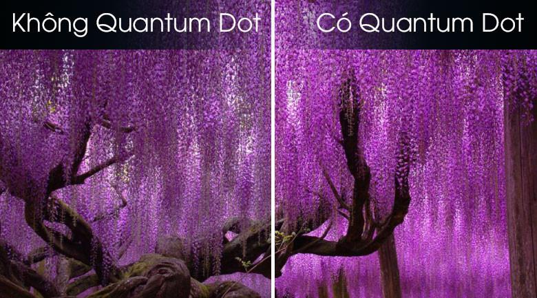 Quantum 8K Processor-Smart Tivi QLED Samsung 8K 75 inch QA75Q800T