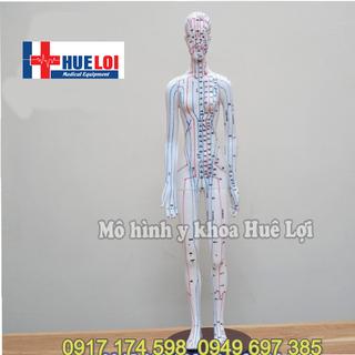 Mô hình huyệt vị và các đường kinh lạc của nữ cao 50cm - MHNN-600k thumbnail