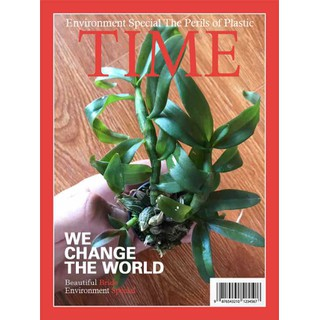 Com bo 2 cốc hoa lan phi điệp mặt hoa đẹp hàng gieo hạt - 9786 thumbnail