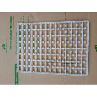 combo 10 cái - khay ấp trứng bồ câu - 800 2