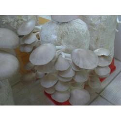 6 phôi nấm