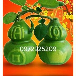 Khuôn trái cây