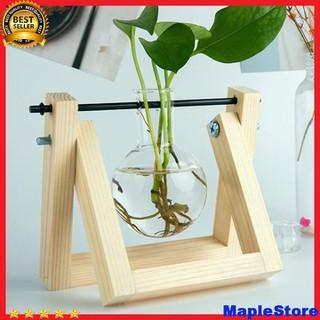Lọ thủy tinh trồng cây -Lọ thủy tinh trồng cây - Top314. thumbnail