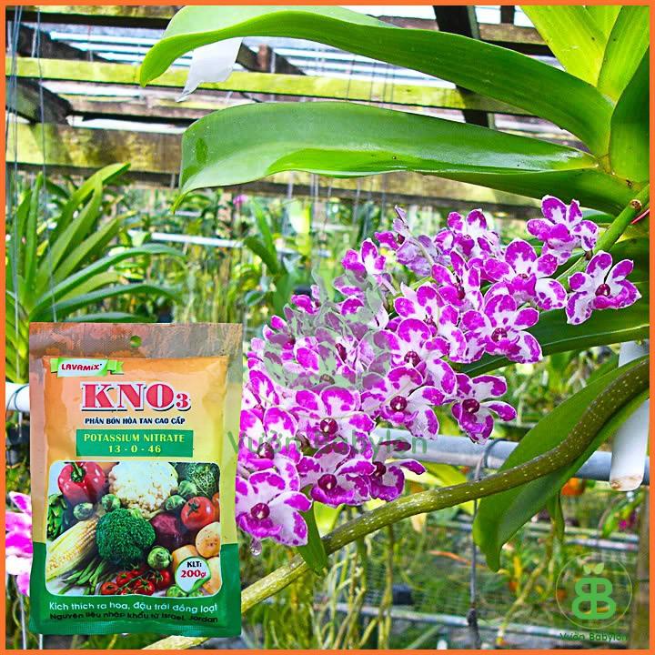 phân bón KNO3 kích thích ra hoa, đậu trái