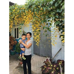 HOA LEO LAN HOÀNG DƯƠNG
