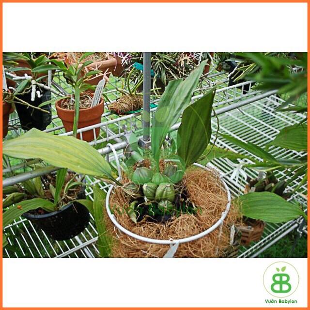 giải độc cây trồng AMI GREEN