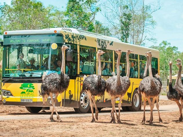 Vinpearl Safari Phú Quốc - thiên đường thế giới động vật bán hoang ...