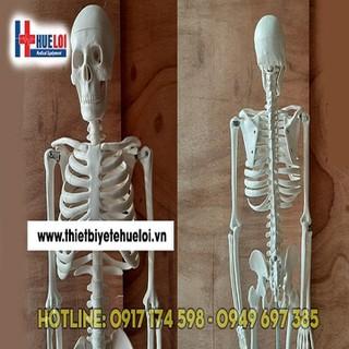 Mô hình cấu tạo khung xương người 85CM - MHXUONG85 thumbnail