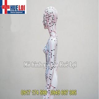 Mô hình đông y huyệt vị nữ 50cm - MHHVNU50 thumbnail