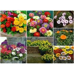 Combo 7 gói hạt giống hoa các loại - tặng 1 phân bón