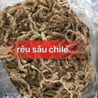 Rêu sâu chi lê giúp giữ ẩm cho lan ( 100gam) - 2289 thumbnail