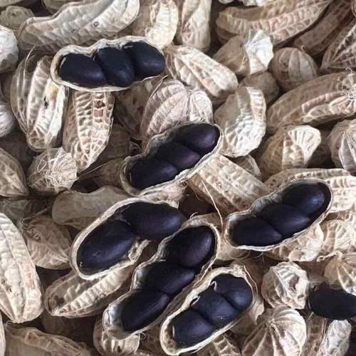 Hình ảnh Hạt giống lạc đen,giống mới năng suất cao,kèm hướng dẫn chi tiết kỹ thuật gieo hạt,Đặc biệt tặng ngay gói kích mầm và phân khi mua sản phẩm Lạc Đen