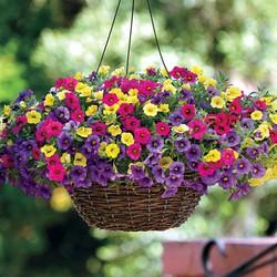 Hạt giống hoa triệu chuông 100 hạt MUA ĐỂ NHẬN QUÀ NÀO (MUA TỪ 50K 1 ĐƠN HÀNG TẠI SHOP ĐỂ ĐƯỢC TẶNG 2 SP KHÁC)