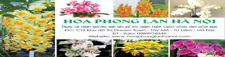 Hoa Phong Lan Hà Nội