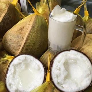Cây giống Dừa Sáp Trà Vinh cho thạch thơm ngon- 3 năm cho quả - dừa sáp thumbnail