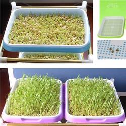 Khay trồng giá đỗ, ươm rau mầm sạch