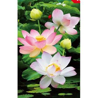 Tranh đính đá những đóa hoa sen VS074 - VS074 thumbnail