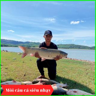 [HOT] Mồi câu cá LK Hòa đánh tất cả các loại cá - SIÊU NHẠY thumbnail