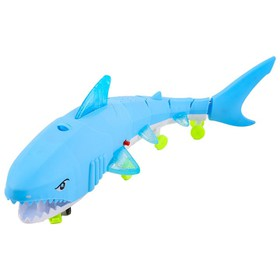 CÁ PHÁT NHẠC - cá mập phát nhạc