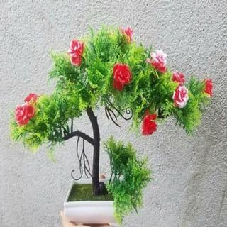 chậu bonsai trang trí - BS008 thumbnail