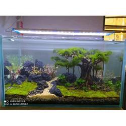 Hồ thủy sinh với bonsai tuyệt đẹp