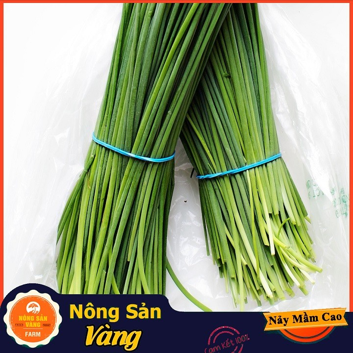 Hạt giống Rau Hẹ Ta - Hạt giống Hẹ Ta Tỉ Lệ Nảy Mầm Cao, Mùa Vụ Quanh Năm ( Gói 1 Gram ) - Hạt giống Nông Sản Vàng