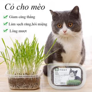 Cỏ mèo tươi. Cỏ nếp dành cho chó mèo. Hương vị tự nhiên. Kích thích tăng trưởng và bảo vệ hệ tiêu hóa thú cưng-Pet sCưng - CC015 thumbnail