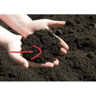 Đất sạch trồng cây 1kg - Dattrongcay thumbnail