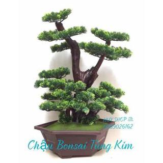 CHẬU GỐC CÂY TÙNG KIM NHÂN TẠO 2011 - CHAU-GOCCAY-TUNG2011 thumbnail