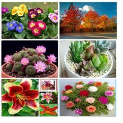 Combo 6 gói hạt giống hoa các loại dễ trồng V1– tặng 1 phân bón