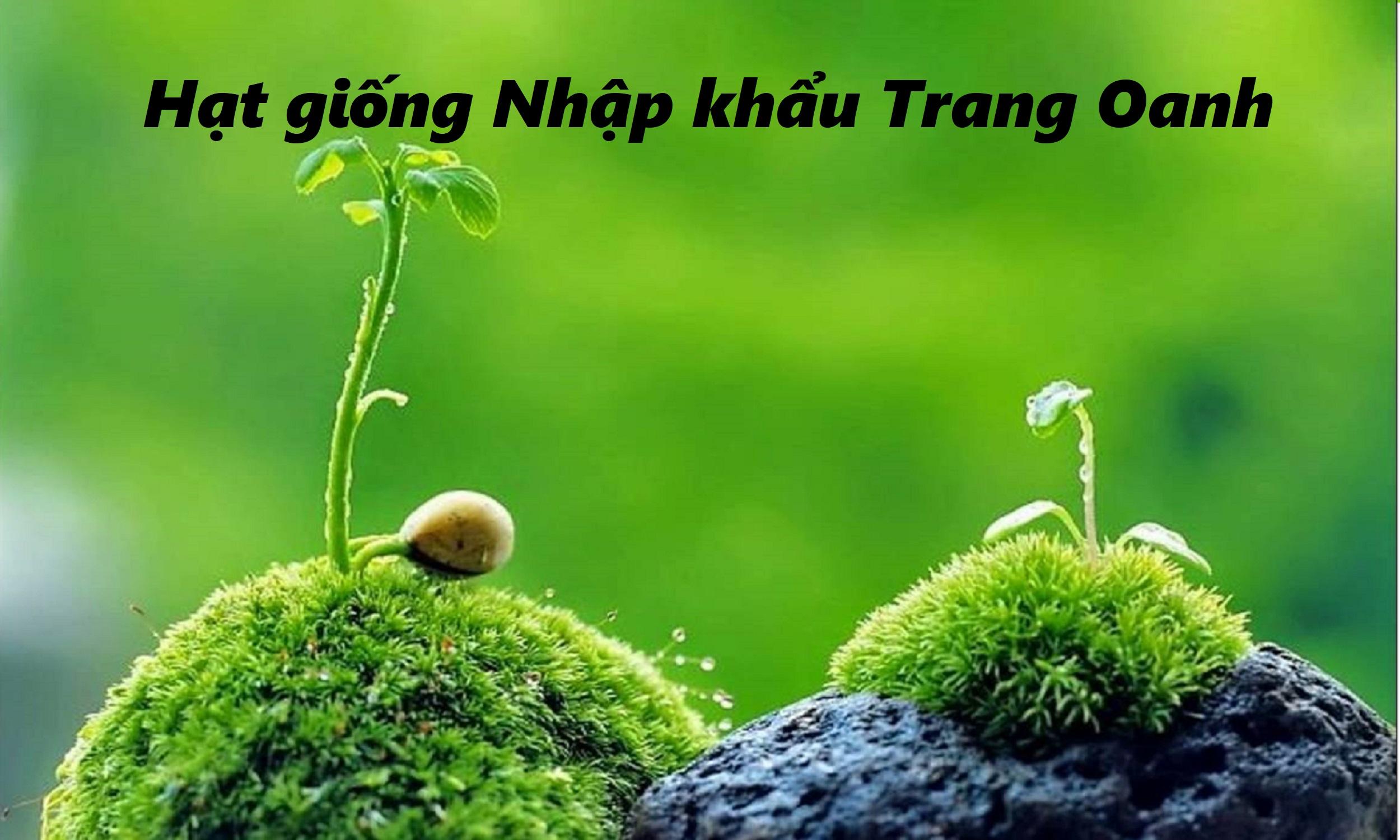 Hạt giống Nhập khẩu Trang Oanh