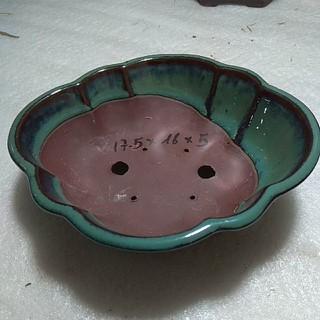 Chậu bonsai mini bồ đề - CBH01 thumbnail