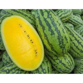 Dưa hấu xanh ruột vàng gói 10 hạt - 3728778910 thumbnail