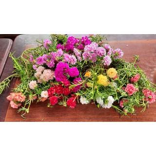 100 cành hoa mười giờ kép 10 màu - 001 thumbnail