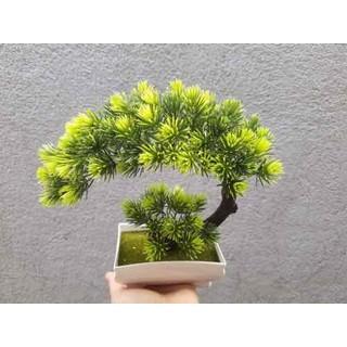 chậu cây bonsai giả - BS011 thumbnail