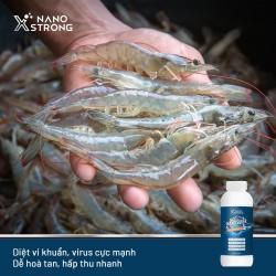 Dung Dịch Nano Xstrong Nano Bạc Silver 1000ml - Chuyên Dùng Trong Nuôi Trồng Thủy Hải Sản - AHT Corp