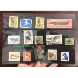 Bìa tem chủ đề các loài chim 14 con tem khác nhau