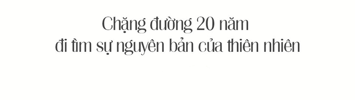 Quế Việt Nam