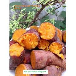 1kg khoai lang mật Tà Nung Đà Lạt loại 1