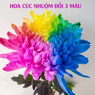 Dung Dịch Nhuộm Hoa Cắt Cành Đổi Màu (Combo 5 chai) theo Công Nghệ Israel giúp hoa nhuộm đổi màu theo ý muốn The Color Sodium for Fresh Flowers - 5 chai màu nhuộm hoa tươi lâu Israel thumbnail